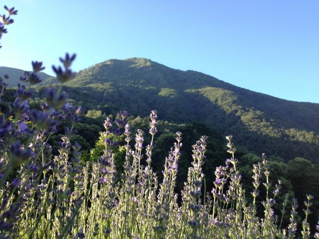 Lavendel-Berge
